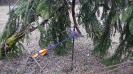 2011-01-10 Tir à l'Oiseau